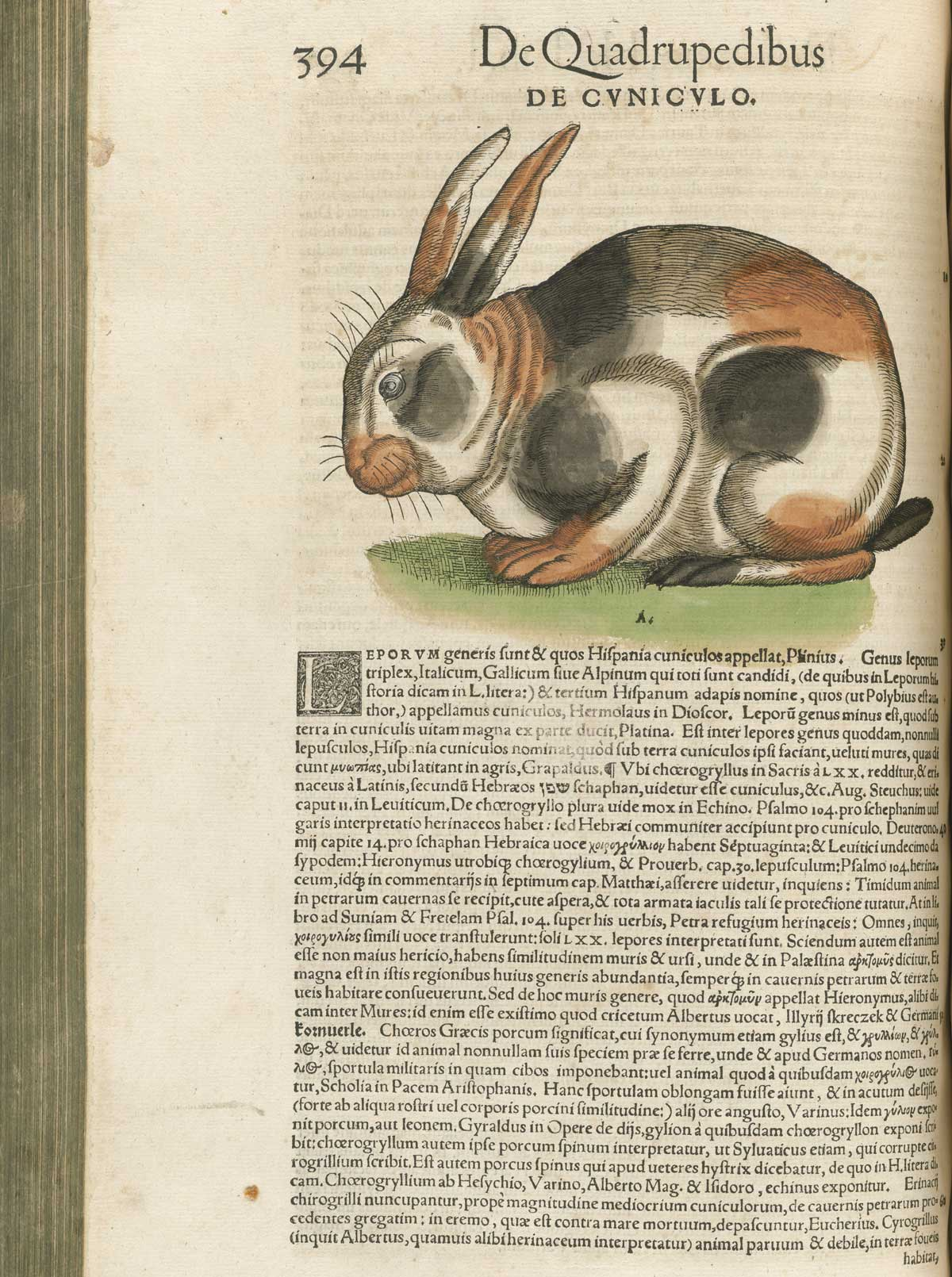 The usual imagery of the rabbit in Medieval art is that of purity and  helplessness – that's why some Medieval portrayals of Christ have marginal  art ...